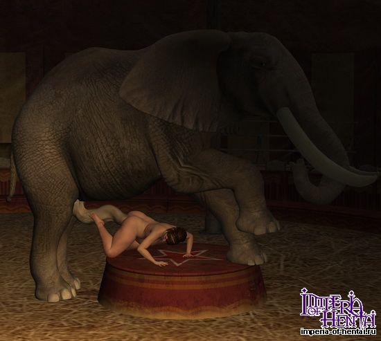 слон ебет шлюх